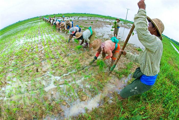 Economia Social y Solidaria en la zona rural de China